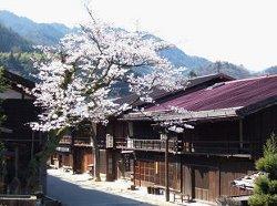 (寺下の桜)
